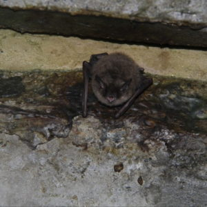 picture of pest trapping service Leslie Michigan